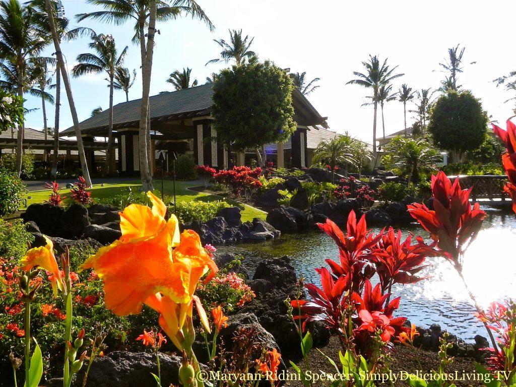 Morning splendor in Kona, Hawaii