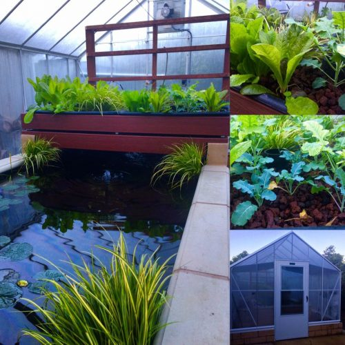 Our farm's acquaponics greenhouse where we grow fresh produce using solar power