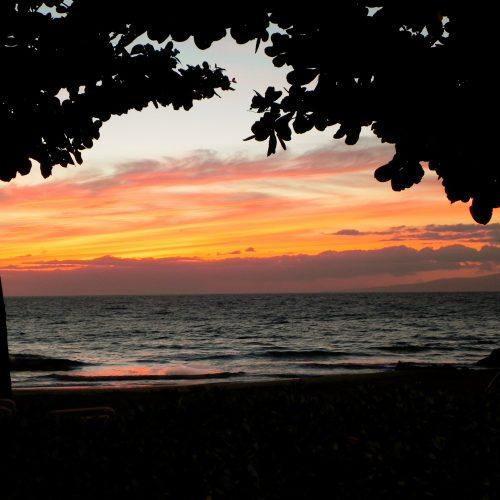 HawaiianNights